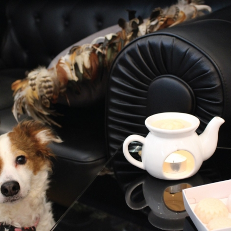 diffuseur-huile-essentielle | céramique-blanche-chien-mascotte