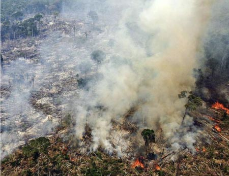 foret-amazonienne-feu-soja-deforestation
