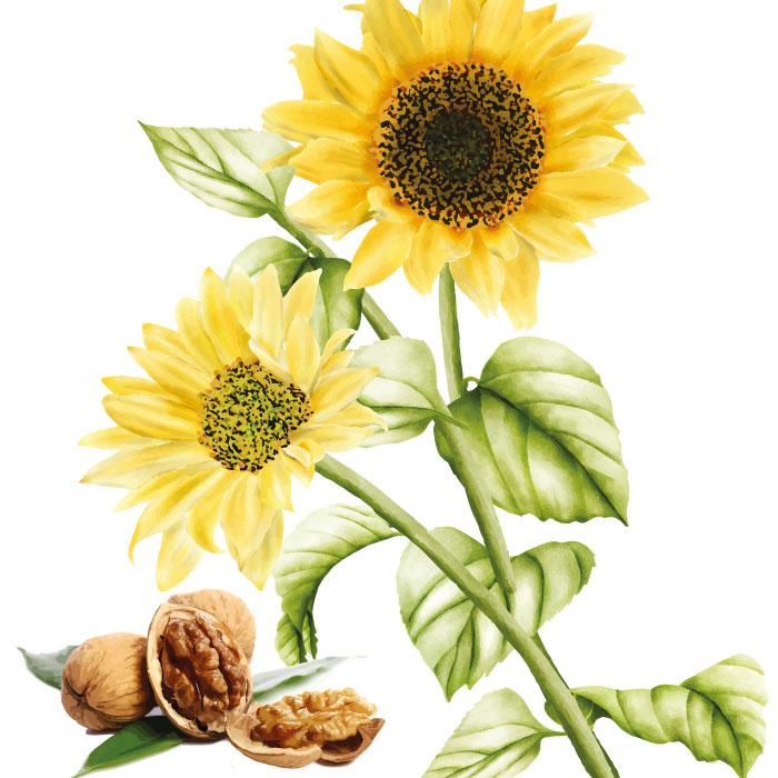 cire-bougie-tournesol-noix-parfum