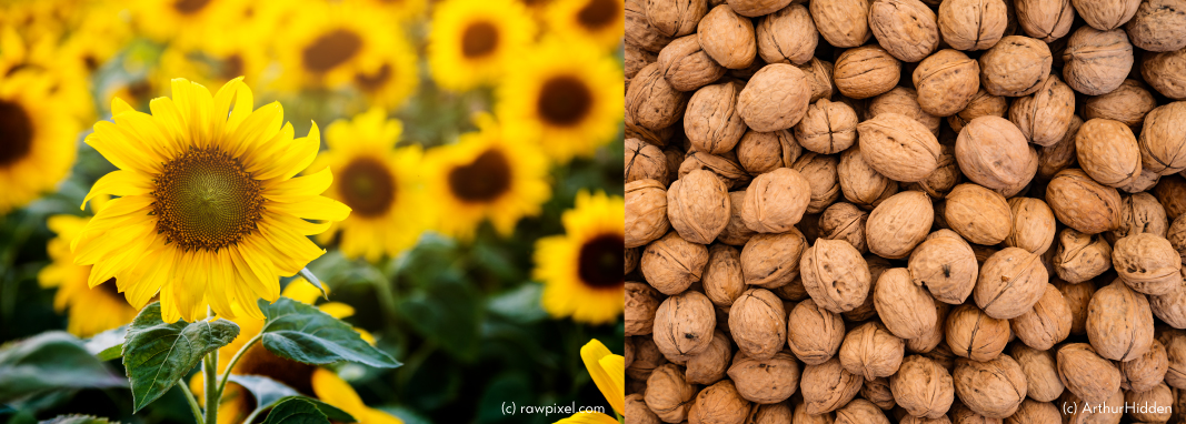 cire-bougie-tournesol-noix-ecoresponsable-locale